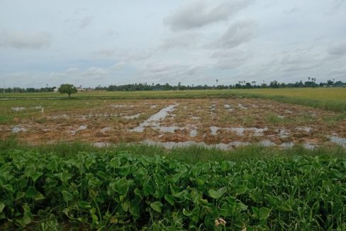 Rice Field Land for Sale in Krong Siem Reap