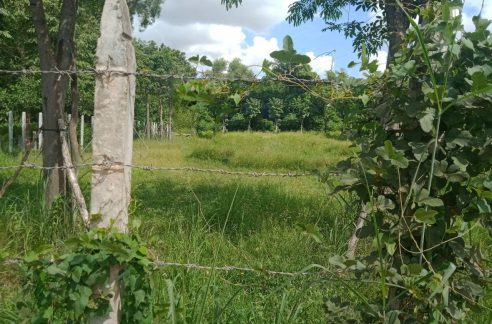 Very nice Land for Sale in Siem Reap (1)